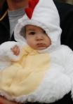 *Baby chicken