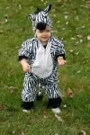 *Zebra